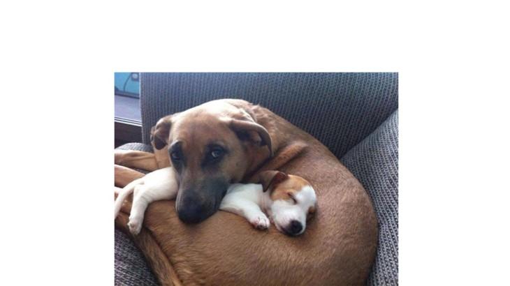 pas majka