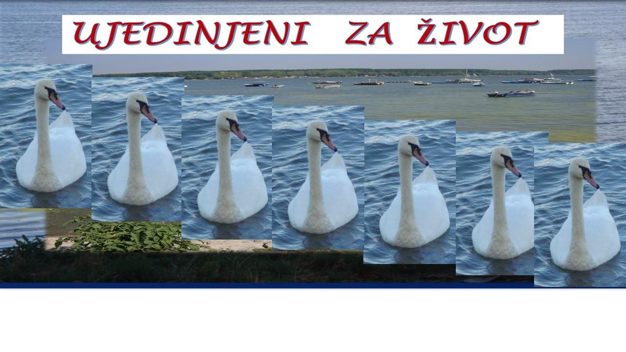 swan unity