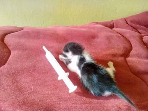 spašena maca