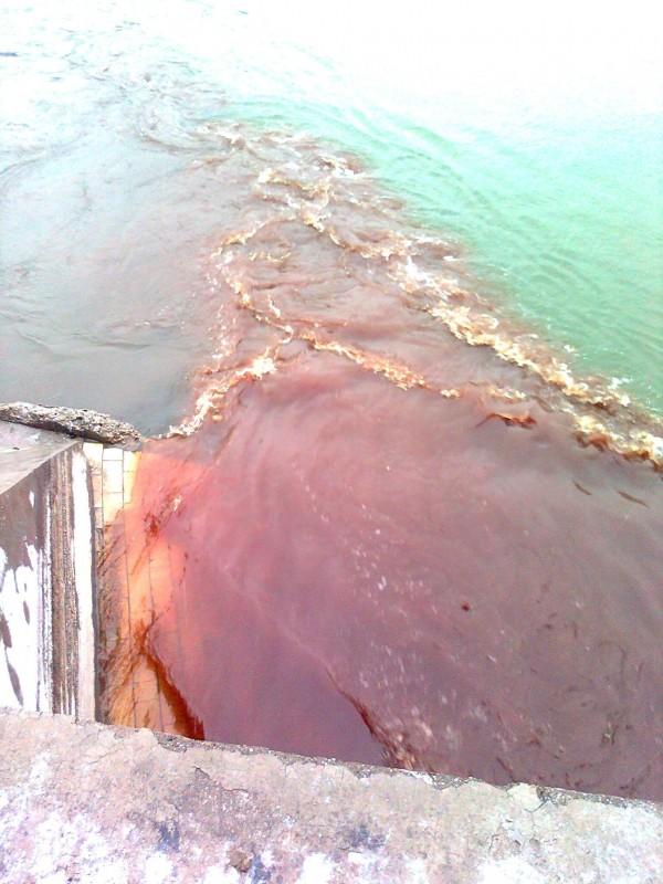 Krv iz klanica zagadjuje Dunav