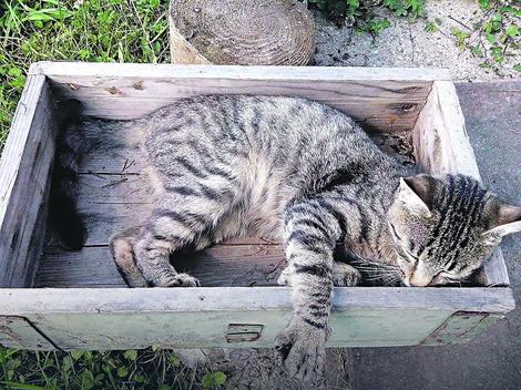kraljevo ubijene mačke
