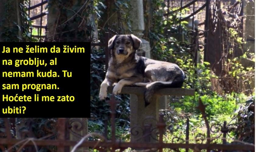 groblje pas