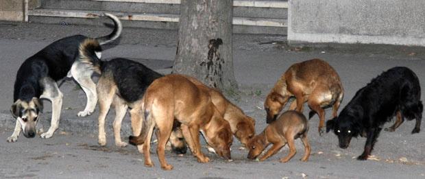 psi na ulici