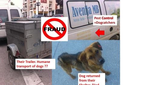 avenija fraud