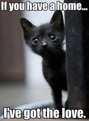 mala crna maca