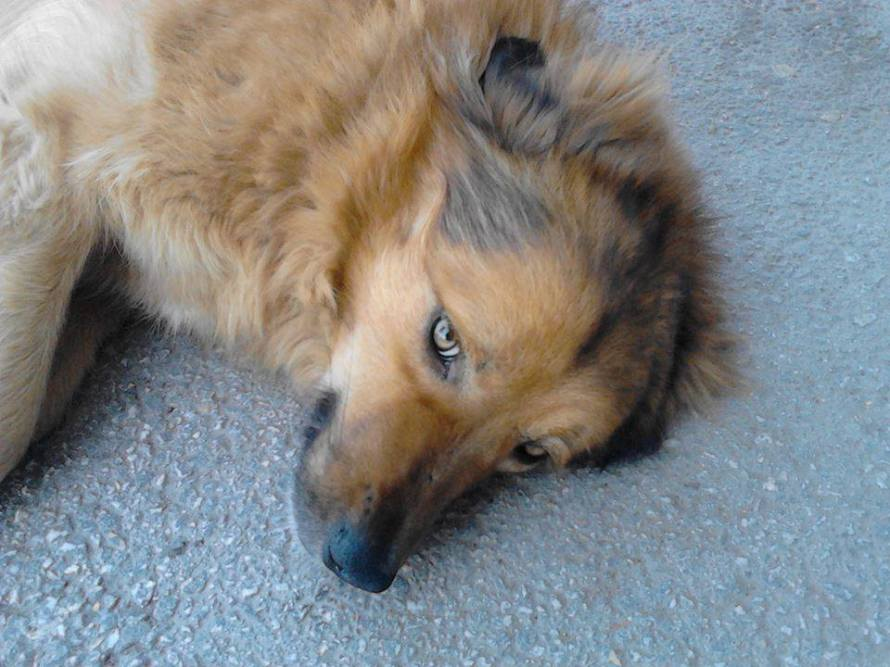 vranje1 pas umro u azilu iskrvario