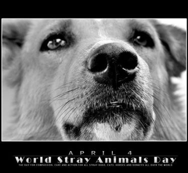 word stray animals day 4 april