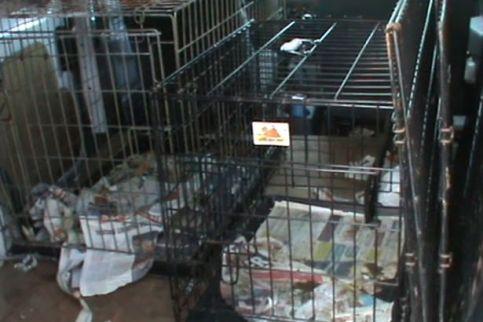 dog-kennels-in-vans