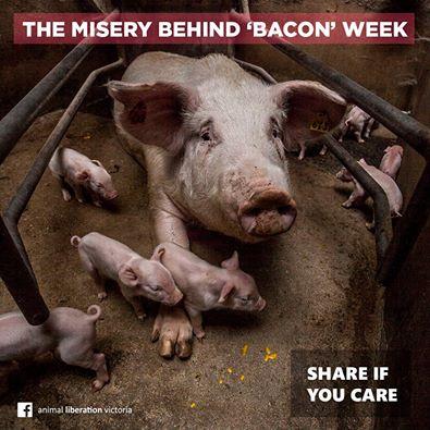 bacon's week