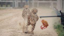 sangai animal park