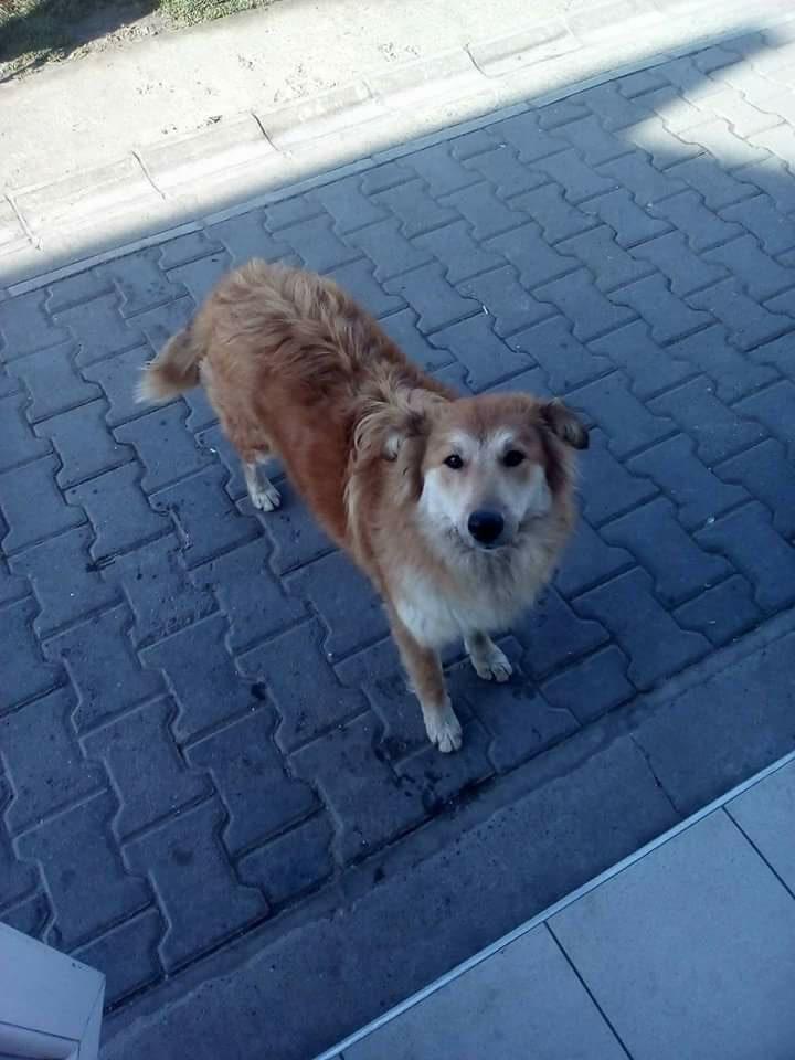 pas radmile nićiforović ista akcija sakupljanja