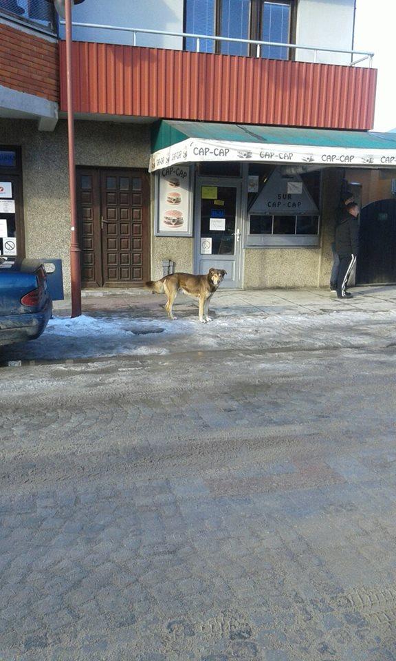 beskućni pas